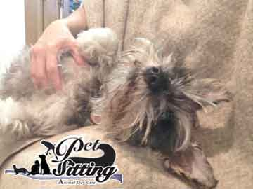 Small ogs boarding pet sitter service Menifee California Sun City Senior travel pet care