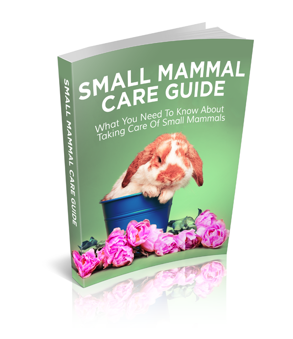 Menifee pet Sitting- Dog training tips eBook