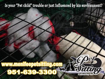 Menifee pet sitter service quality pet care home care service