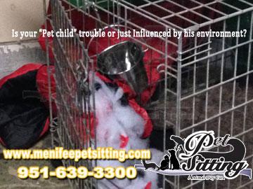 pet care service- Menifee Pet Sitting
