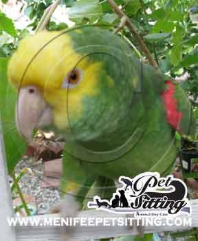 Parrot Care Menifee Pet Sitting Murrieta  Temecula Sun City California