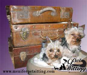 Senior pets pet sitter service in  Menifee California